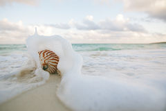 Nautilus shell on white beach sand rushed by sea waves Stock Photo