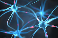 Neuronen im Gehirn Stockfotos