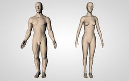 Neutral Human Bodies Stock Image