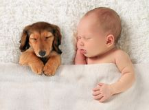 Newborn baby and puppy Stock Photography