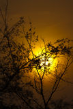 Nightfall with tree Stock Images