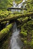 Northwest waterfall stream Stock Image