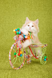 Norwegian Forest Cat kitten sitting inside decorated tricycle cart Stock Photo