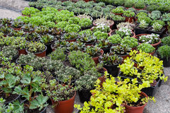 Nursery plants shop Royalty Free Stock Photo