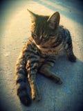 O melhor gato Fotografia de Stock Royalty Free