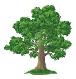 Oak tree and green grass Stock Photography