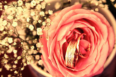 Obrączki ślubne w róży kwitną z dekoraci tłem filtrującym Fotografia Royalty Free