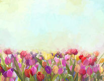 Oil painting Tulips  flowers in the meadows Stock Image