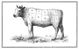 Old Beef chart Stock Photography