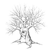 Old Tree with heart Royalty Free Stock Photography