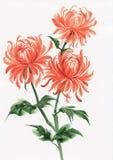 Orange chrysanthemum Royalty Free Stock Photography