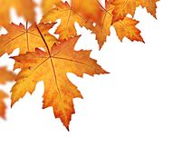 Orange fall leaves border Stock Photography