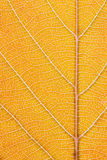 Orange leaf macro Stock Images