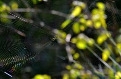 Orb Weaver Spider and its Web Stock Photos