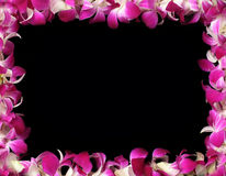 Orchids frame Stock Image