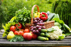 Organic vegetables in wicker basket in the garden Royalty Free Stock Photography