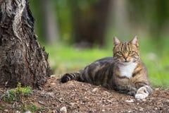 Outdoor Cat Stock Photos
