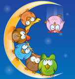 Owl group cartoon Stock Photography