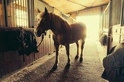 paard in stal Royalty-vrije Stock Fotografie