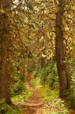 Pacific Northwest Forest Royalty Free Stock Photography