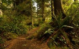 Pacific Rim Rainforest Royalty Free Stock Photo