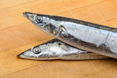 Pacific Saury Stock Image