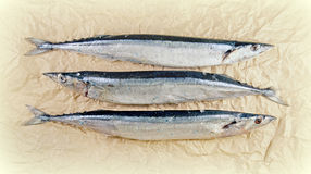 Pacific saury on the paper Stock Photography