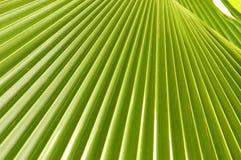 Palm Leaf Royalty Free Stock Photos
