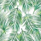 Palm leaf seamless pattern Royalty Free Stock Photos