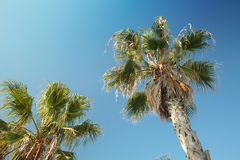 Palm trees in Barcelona Stock Photography