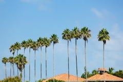 Palm Trees Row Royalty Free Stock Photos