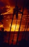 Palmtree sunset Tahiti Stock Images