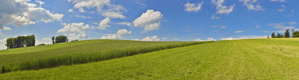 Panoramic picture with corn field and blue sky Stock Images