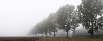Panoramic - row of trees Royalty Free Stock Photos