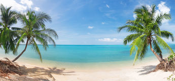 Panoramisch tropisch strand met kokospalm Royalty-vrije Stock Afbeelding