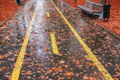 Park in Autumn Rain Stock Image