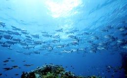 Parte 1 dell'oceano della madre Immagini Stock Libere da Diritti