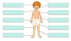 Parts of the body Royalty Free Stock Image