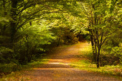Peaceful Romantic Forest Stock Images