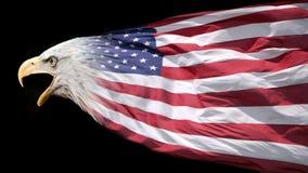 Patriottische adelaar en vlag Stock Foto's