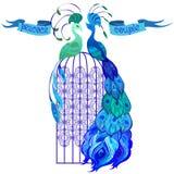 Pavos reales de los pares Cinta con el texto Diseño azul Foto de archivo libre de regalías