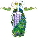 Pavos reales de los pares Cinta con el texto Diseño verde Imagen de archivo