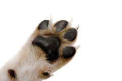 Paw Royalty Free Stock Photography