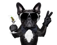 Peace cocktail dog Stock Photography