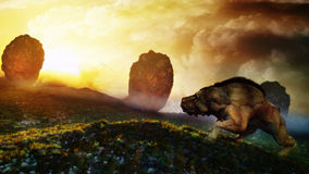 Peaceful Creature Sunset Royalty Free Stock Image