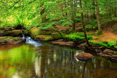 Peaceful Pond in a Forest Royalty Free Stock Photography