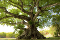 Peaceful tree Royalty Free Stock Images