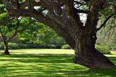 Peaceful tree Stock Photos