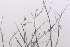 Perched in the Fog Stock Photo