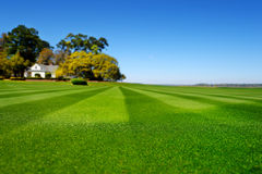 Perfectly striped freshly mowed garden lawn Royalty Free Stock Images